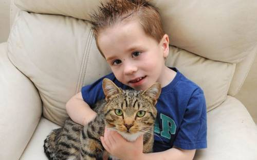Кот-спасатель по кличке Смадж